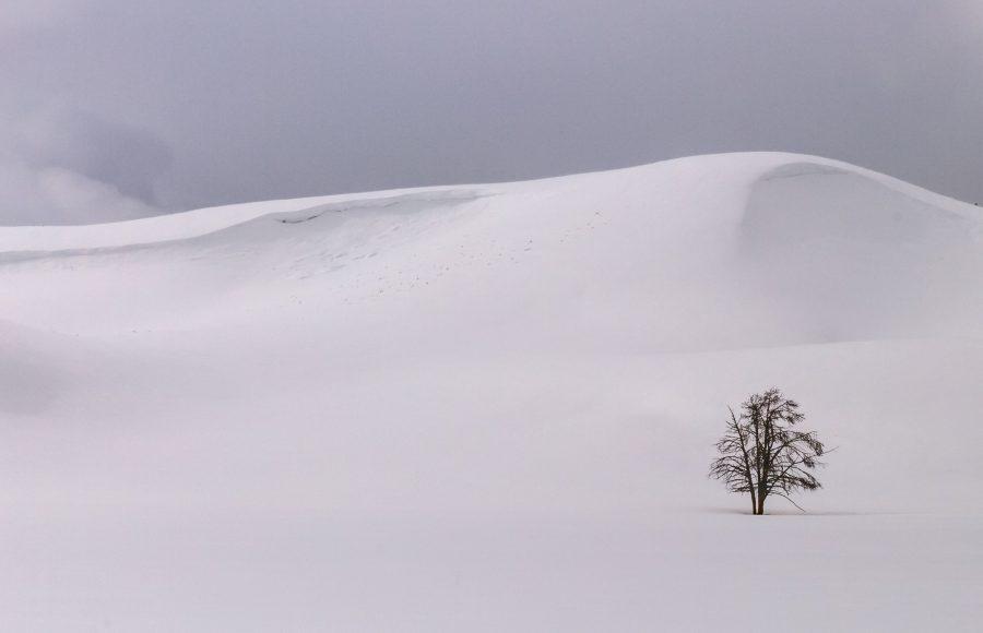 Winter in Yellowstone 07 - Doug Arnold