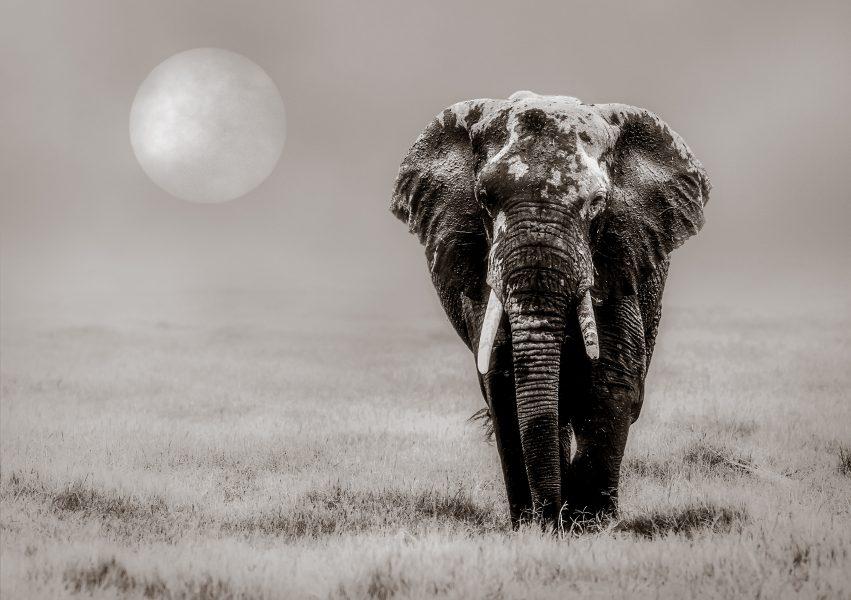 Lone Traveler - Jan Lightfoot