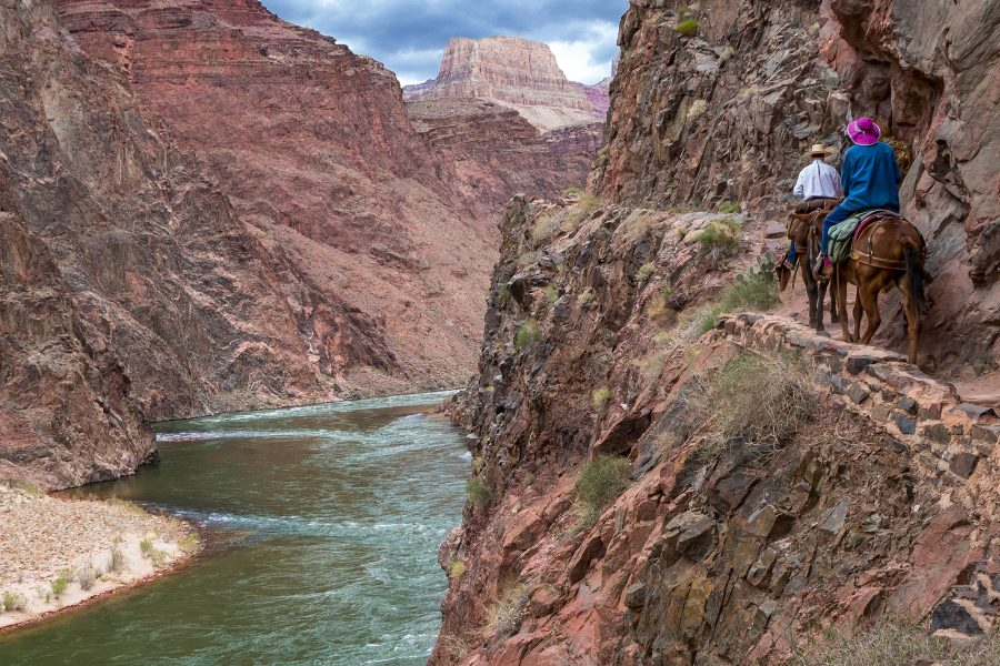 The Great Grand Canyon Mule Ride 02 - Jan Lightfoot