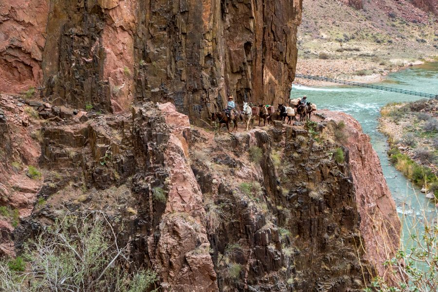 The Great Grand Canyon Mule Ride 03 - Jan Lightfoot