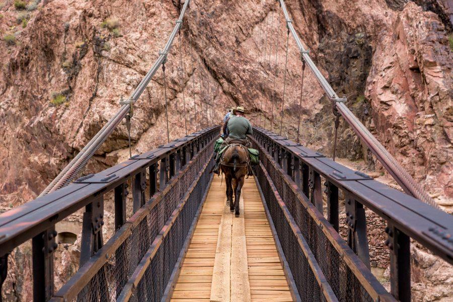 The Great Grand Canyon Mule Ride 05 - Jan Lightfoot