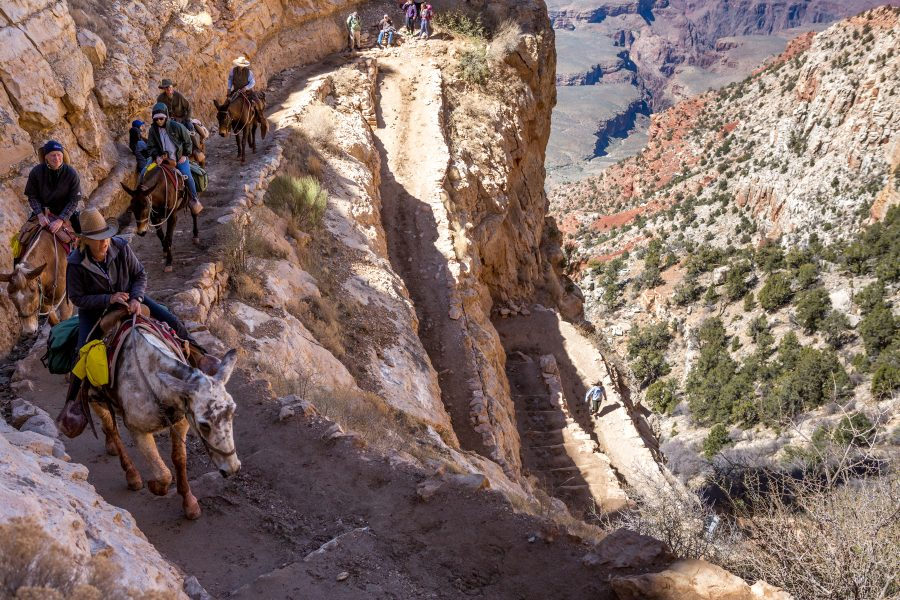 The Great Grand Canyon Mule Ride 07 - Jan Lightfoot